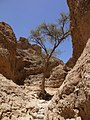 Sesriem Canyon (6486774941).jpg