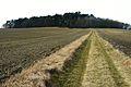 Settlement from the Bronze Age. Wierzenica (3).JPG