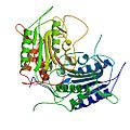 Sf caspase-1 structure by Ni 2006, PDB 2NN3.jpg