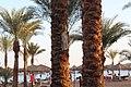 Sharm El-Sheikh, Qesm Sharm Ash Sheikh, South Sinai Governorate, Egypt - panoramio (151).jpg