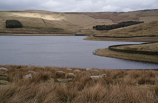 Sheep grazing by Castleshaw Upper Reservoir - geograph.org.uk - 1775580