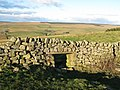 Sheep hole in Hadrian's Wall at Milecastle 41 - geograph.org.uk - 610343.jpg