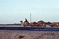 Silk Road 1992 (4367579499).jpg