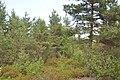 Skats uz purvu Rāvāja virzienā, Babītes pagasts, Babītes novads, Latvia - panoramio.jpg
