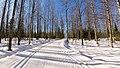 Ski track in forest.jpg