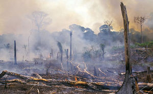Indirect land use change impacts of biofuels - Slash and burn forest removal in Brazil.