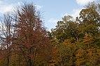 Slate Run-Sugar and Red Maples in Fall 1.jpg