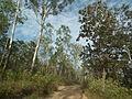 Snap during safari in Wayanad Wildlife Sanctuary 9851.JPG