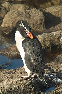 SnaresPenguin (Mattern) large.jpg