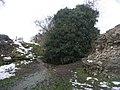 Snowmelt - geograph.org.uk - 1242172.jpg