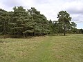Southern edge of Roydon Woods, Sandy Down, New Forest - geograph.org.uk - 62574.jpg