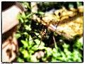 Spider Underside (255571121).jpeg