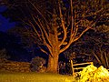 Spooky Tree at Buttermere Youth Hostel - geograph.org.uk - 973544.jpg