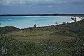 Sporobolus. Salt pan. East of West Bay. Sand lily. (38839899142).jpg