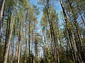 Spring birds singing - wiosenny śpiew ptaków. - panoramio.jpg