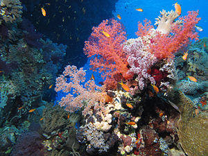 St John's reefs, Red Sea, Egypt.jpg