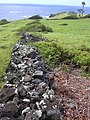 Starr-040423-0058-Schinus terebinthifolius-view wall-Puhilele Pt HNP-Maui (24583736742).jpg