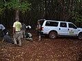 Starr-041024-0152-Eucalyptus sp-trail building-Makawao Forest Reserve-Maui (24091382193).jpg