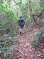 Starr-120425-5169-Syzygium cumini-with Jeremy-Waikapu Valley-Maui (24513447563).jpg