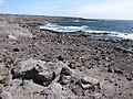Starr-121220-1291-Prosopis pallida-habit view coast-Sailors Hat-Kahoolawe (24831200119).jpg