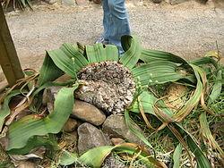 Stellenbosch University Botanical Garden Wikipedia
