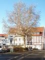 Stolpersteinlage in Soest Grandweg 30.jpg