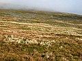 Stone stripes on the slopes of Cross Fell - geograph.org.uk - 664586.jpg