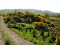 Stoneyinch Farm (Ruin) - geograph.org.uk - 418864.jpg