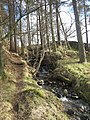 Streamside path amongst the trees - geograph.org.uk - 680562.jpg