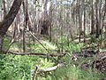 Stringybark creek.jpg