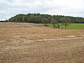 Stubble field - geograph.org.uk - 572116.jpg