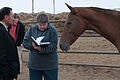 Studfarm in Turkmenistan - Flickr - Kerri-Jo (81).jpg