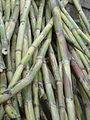 Sugar canes.JPG
