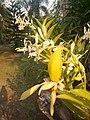 Suvarnabhumi Orchids Farm IMG 20160322 080828 (27447080185).jpg