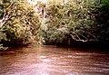 Swamp Tour Louisiana March 1991 01.jpg