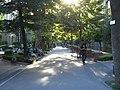 Sycamore Avenue (鈴懸の径) in Rikkyo (St. Paul's) University (立教大学) - panoramio.jpg
