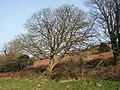 Sycamore in March - geograph.org.uk - 1271376.jpg