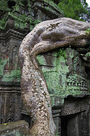 Ta Prohm Angkor giant root.jpg
