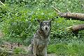 Take me home wolf.jpg
