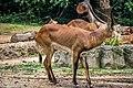 TamanSafariIndonesia104.jpg