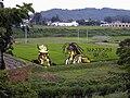 Tanbo art in Yonezawa (1).jpg