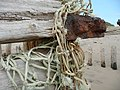 Tangled net and groyne at Spurn Point - geograph.org.uk - 890255.jpg