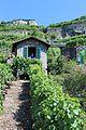Terrasses de Lavaux - panoramio (18).jpg