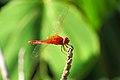 Thailand Riku Show Zhou Dragonfly (27463887234).jpg