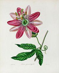 The Botanist0000