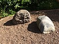 The Hutton Memorial Garden 04.jpg