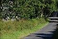The Quarry Road near Banbridge - geograph.org.uk - 494254.jpg