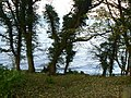 The Tay through the trees - geograph.org.uk - 1057170.jpg