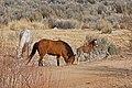 The Wild Horse Herd.jpg