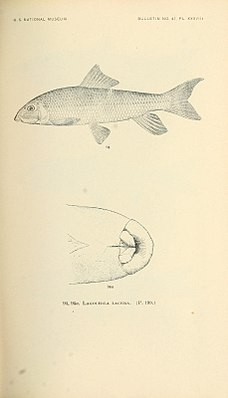 The fishes of North and Middle America (Pl. XXXVIII) (7983313972).jpg